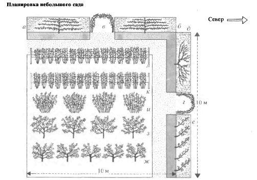 Плодово ягодные схема посадки